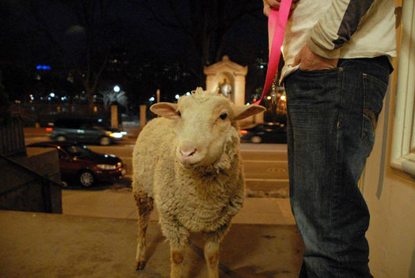 This is Finn on Christmas Eve outside of Arlington Street Church, Unitarian Univeralist